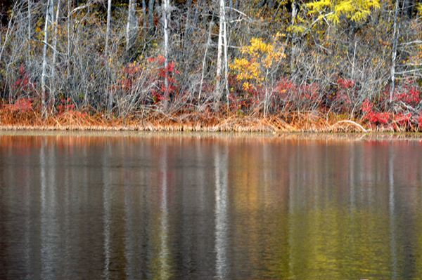 Late Fall Pond