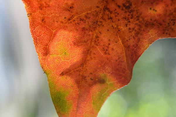 Leaf Geography