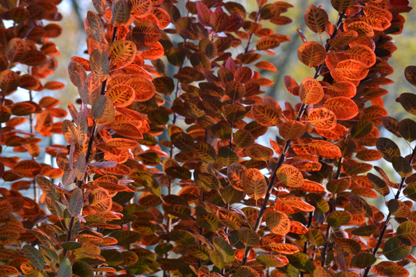 Leafy Orange Glow