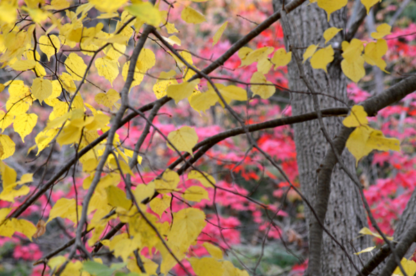 Yellow with a Pink Backdrop