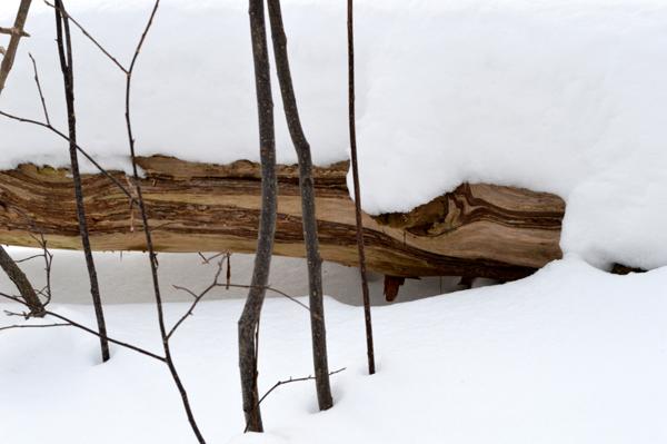 Silent Wood
