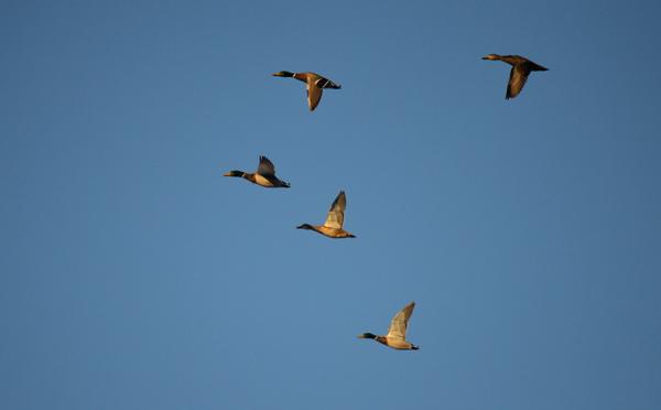 Five in Flight