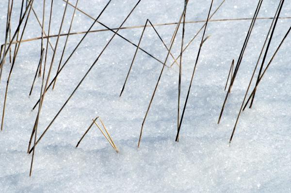 Geometric Grasses