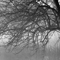 Branch Cascade