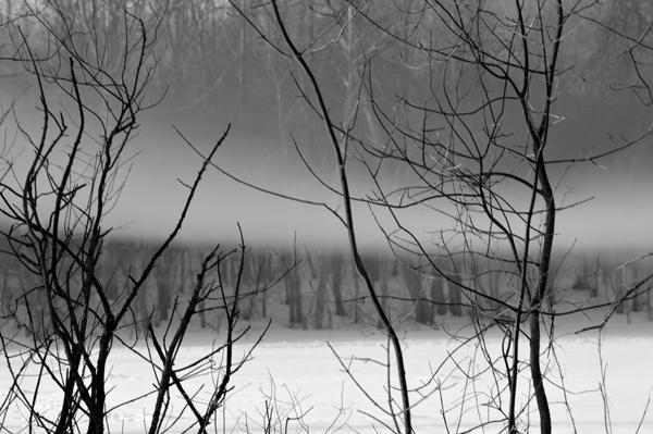 Hush on the Woods