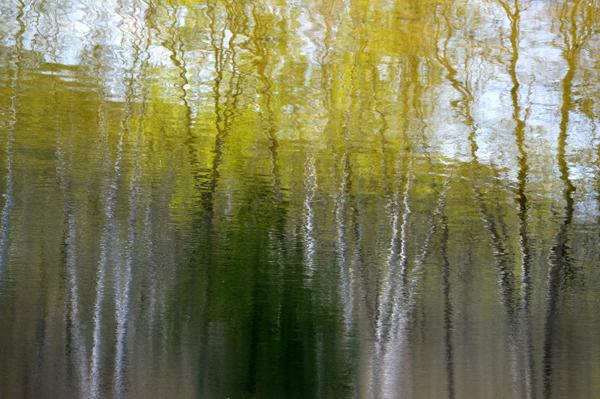 Spring Tree Reflection II