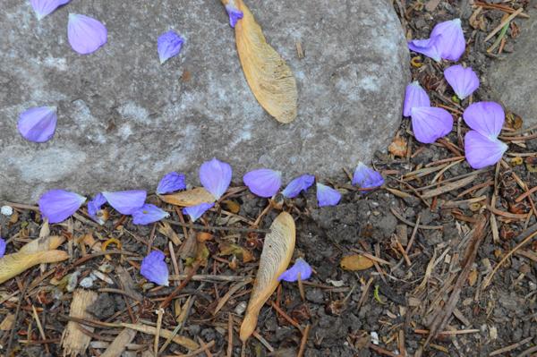 Light Purple Petals