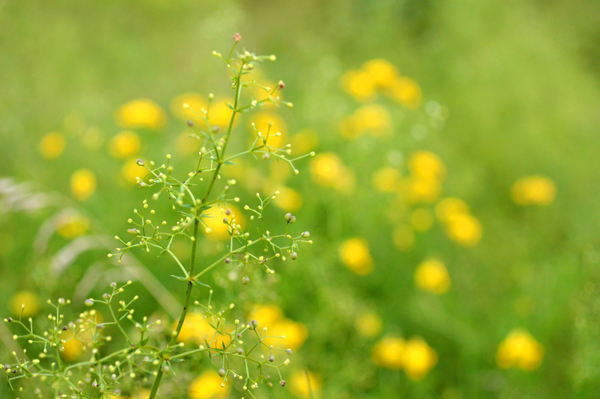 Delicate Summer Field