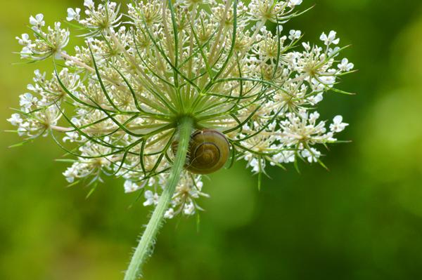 Living Under a Flower