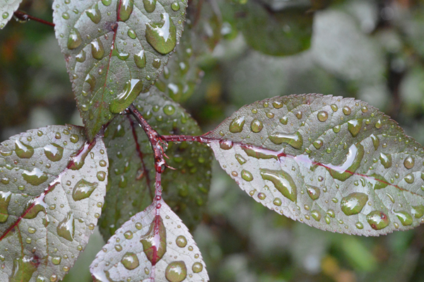 Rain Beads