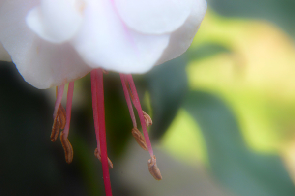 Soft Fuchsia