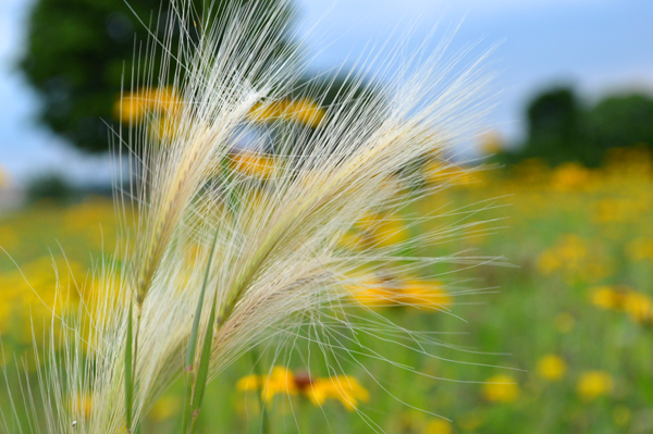 Warm Summer Wind