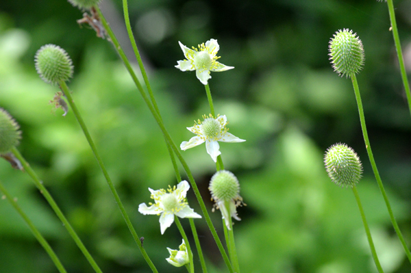 White Pond Wildflowers