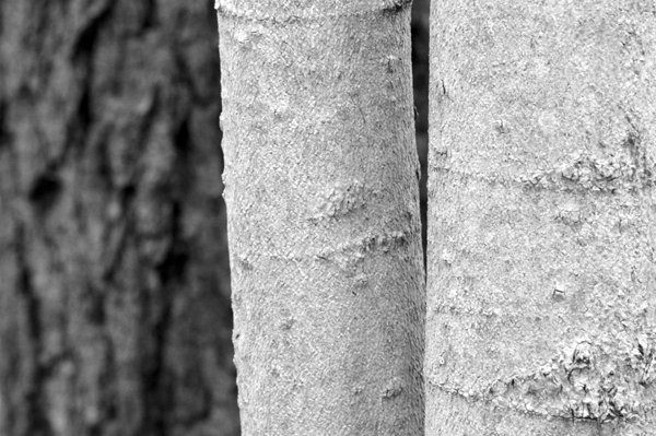 Black and White Trunks