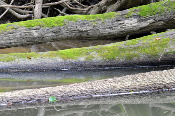 Logs on the Sydenham