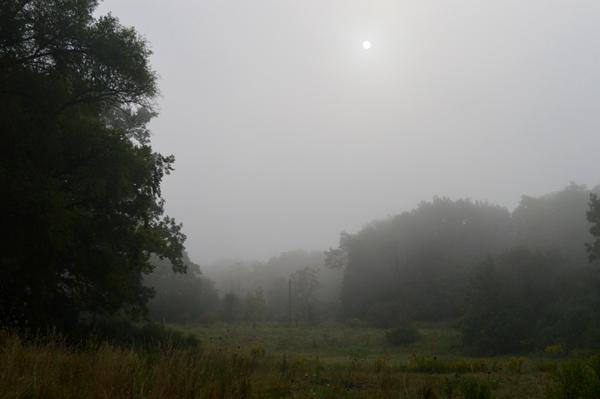 Morning Fog at Westminster Ponds