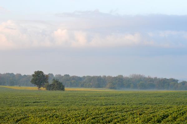 Field Near Dorchester