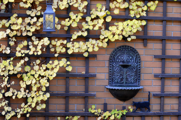 Hydrangea Yellow