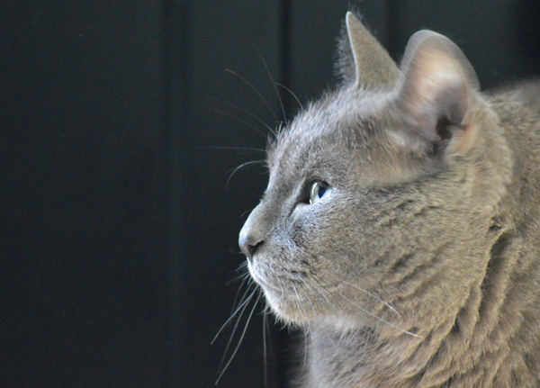 Max's Grey Buddy