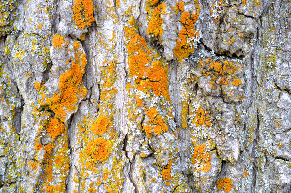 Orange Lichen on Grey
