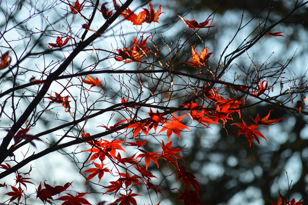 Red Flutter