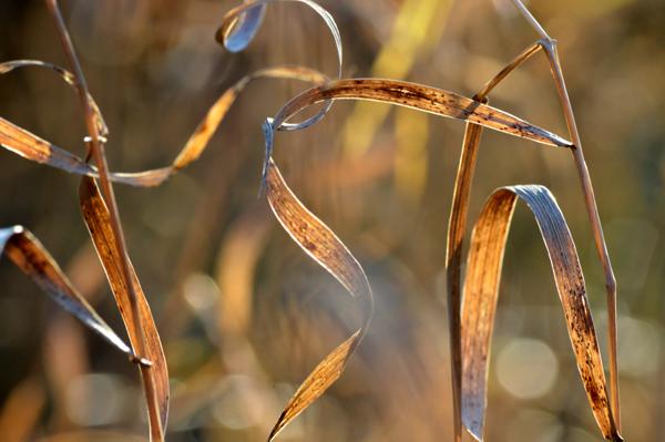 Warm Grasses