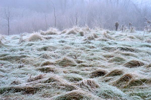 Flattened Field