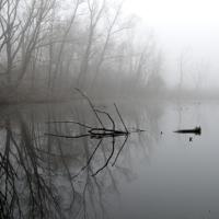 Fog on Walker's Pond