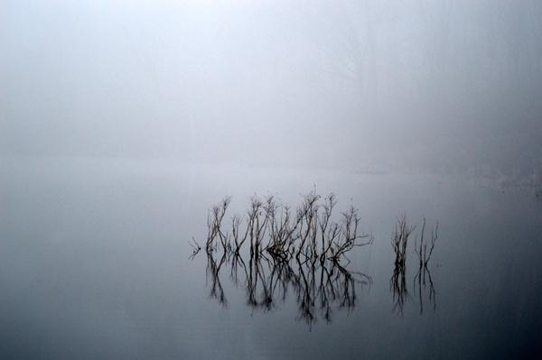 Hush on the Pond