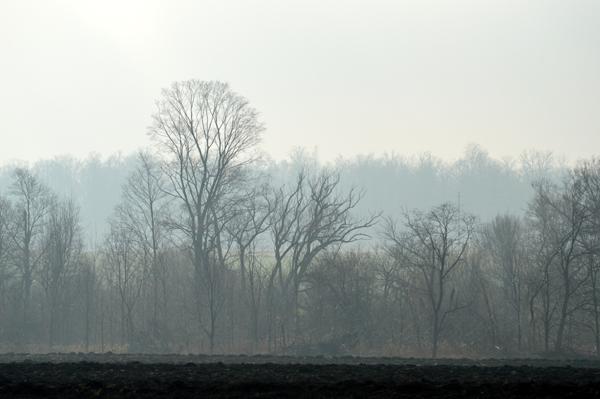 Misty December Field