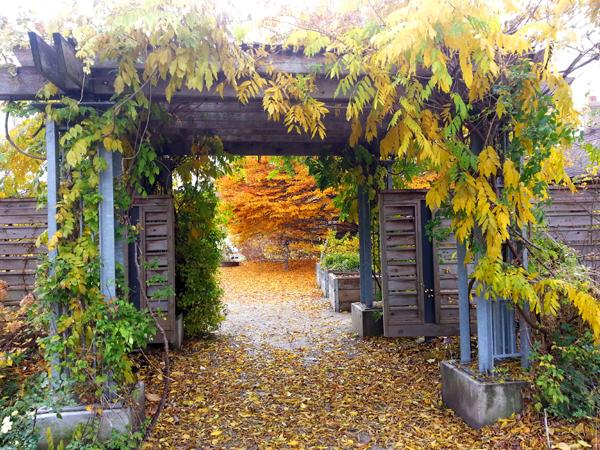 Fall Passageway