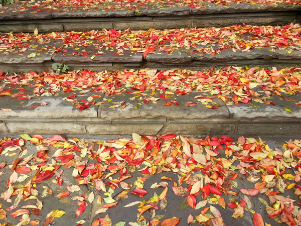 Red Leaf Stairs