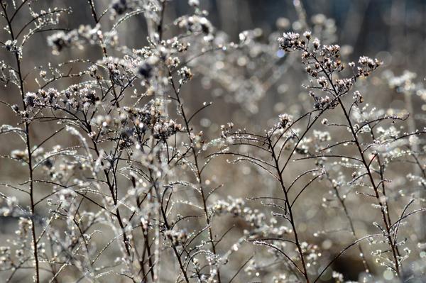 Silver Field