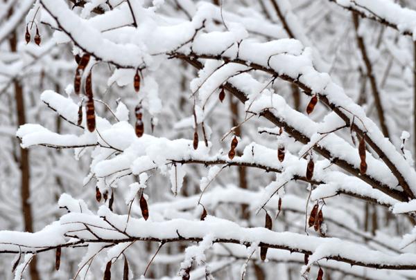 Symphony of Snow