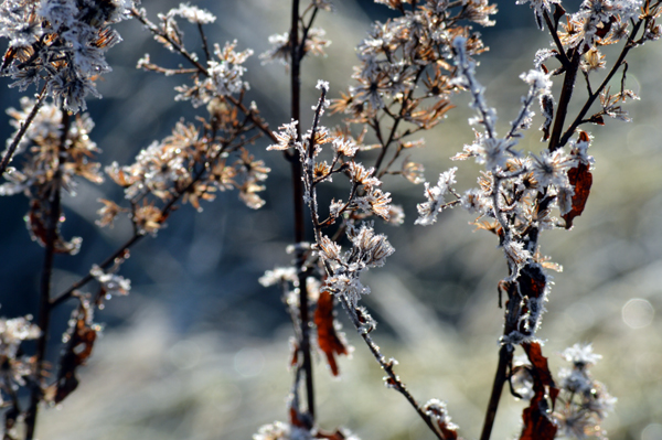 Winter Flowers in the Meadow