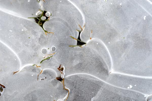 Puddle Ice