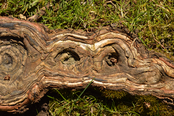 Strange Root