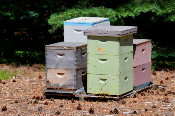 Busy Bee Hives
