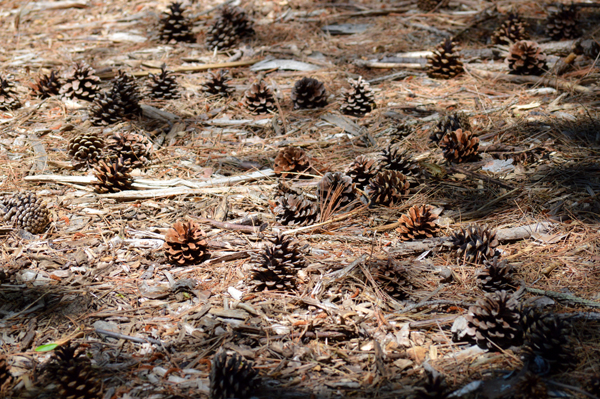 Carpet of Cones