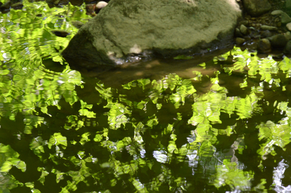Leafy Reflection