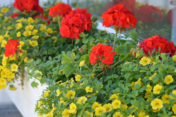 Red and Yellow Window Box