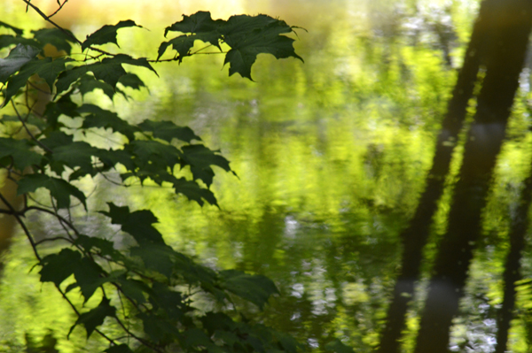 Summer Green Reflection
