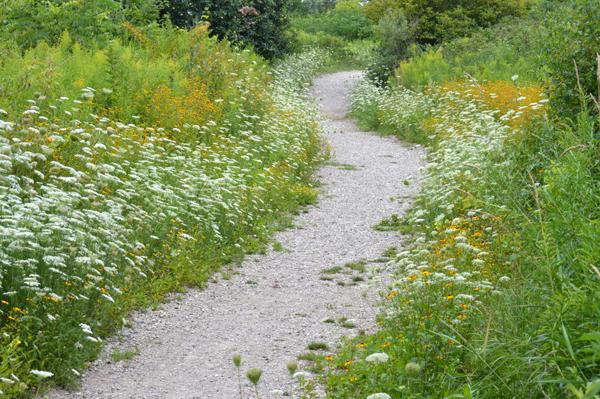 Curvy Summer Path