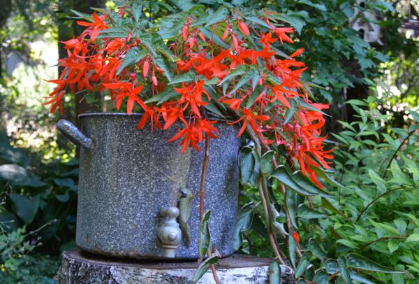 Pot Full of Red