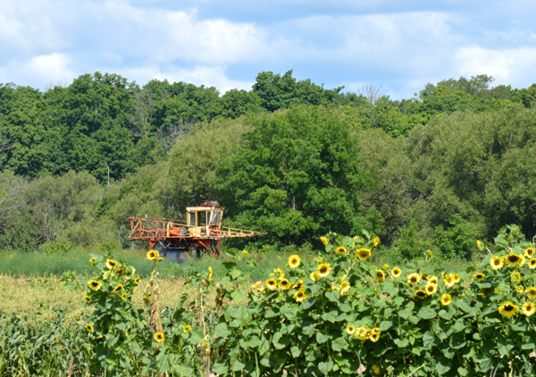 farm view with sunflowers