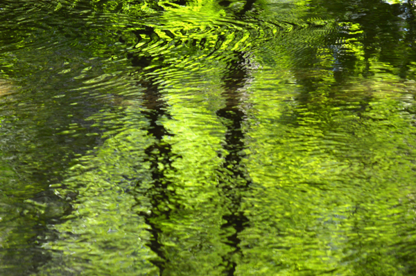 Green Woods Abstract