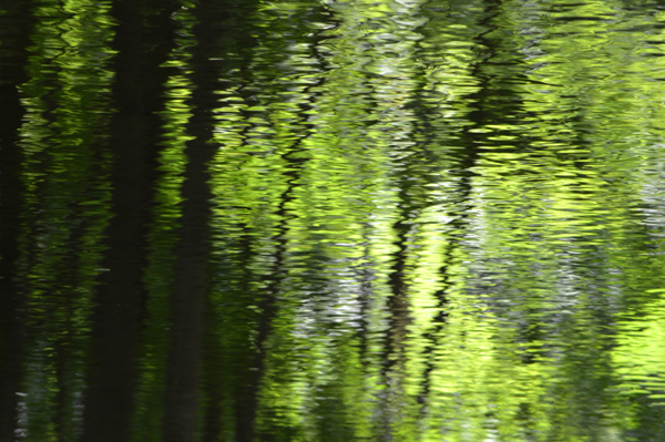Reflection of Summer
