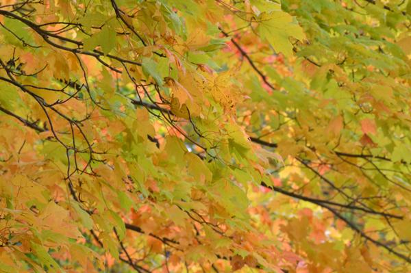 Delicate Fall Palette