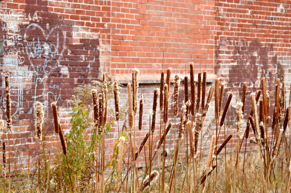 Urban Bullrushes