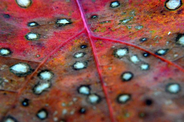 Red Oak Macro